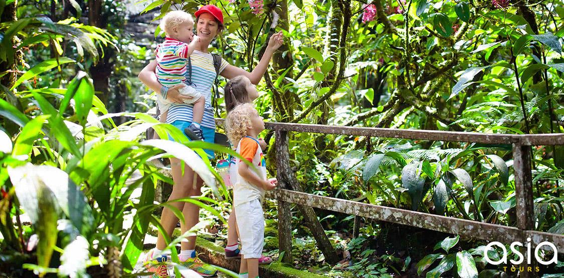 Borneo Family Rainforest