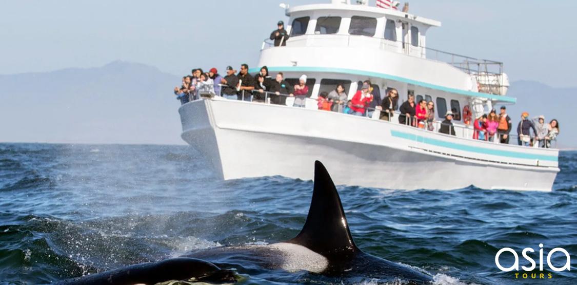 Dolphin Mirissa