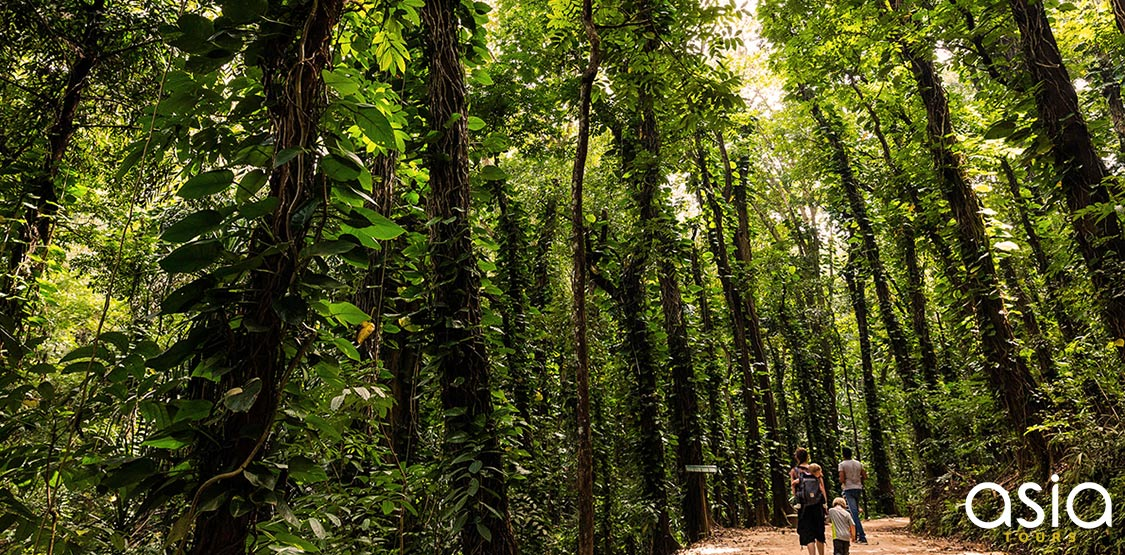 Udawattakele Forest Reserve