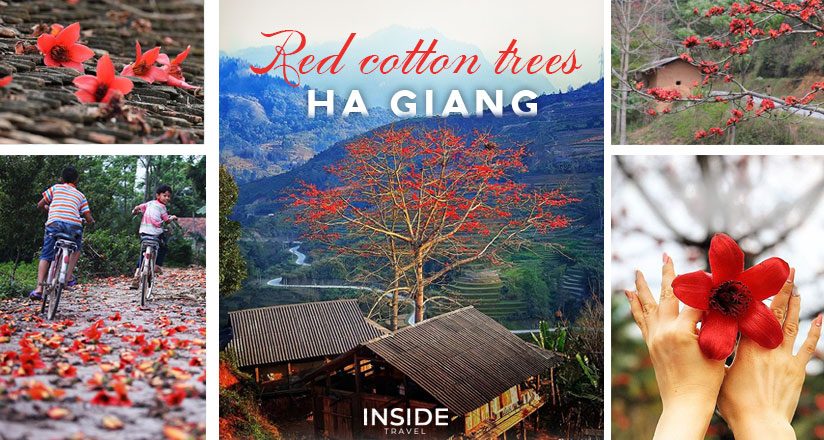 Red Cotton Trees Ha Giang