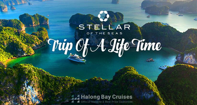 Stellar of the Seas Cruise